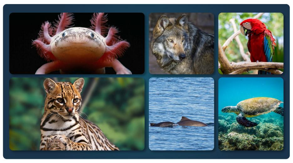 art-04-animales-en-peligro-de-extincion