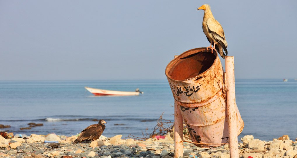 art-06-Un-peligro-para-las-aves