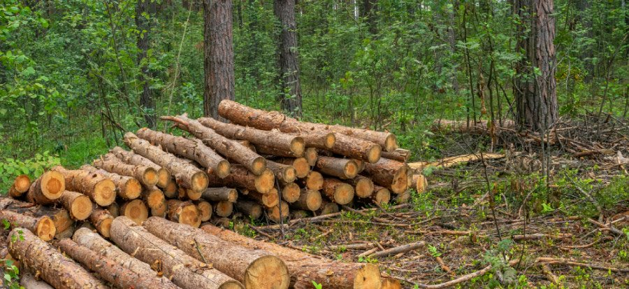 art-08-La-madera-como-almacen-de-carbono