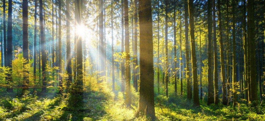 art-09-Los-bosques-y-la-huella-de-carbono